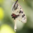 昆虫クラブ 狭山リベンジ-6