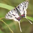 昆虫クラブ 狭山リベンジ-7