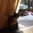 猫は一応 庭駆け回ったが...