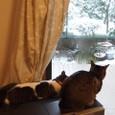 猫は一応 庭駆け回ったが... その2回目
