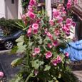 ポルシェと花とチャリンコ、毛布。