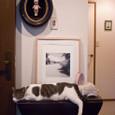 玄関の愛猫ゼット