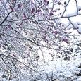 山中温泉 かよう亭 雪中梅−1