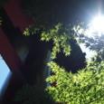 大宮八幡神社